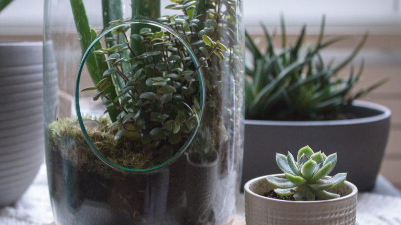 Conseils pour faire un terrarium végétal fait-maison